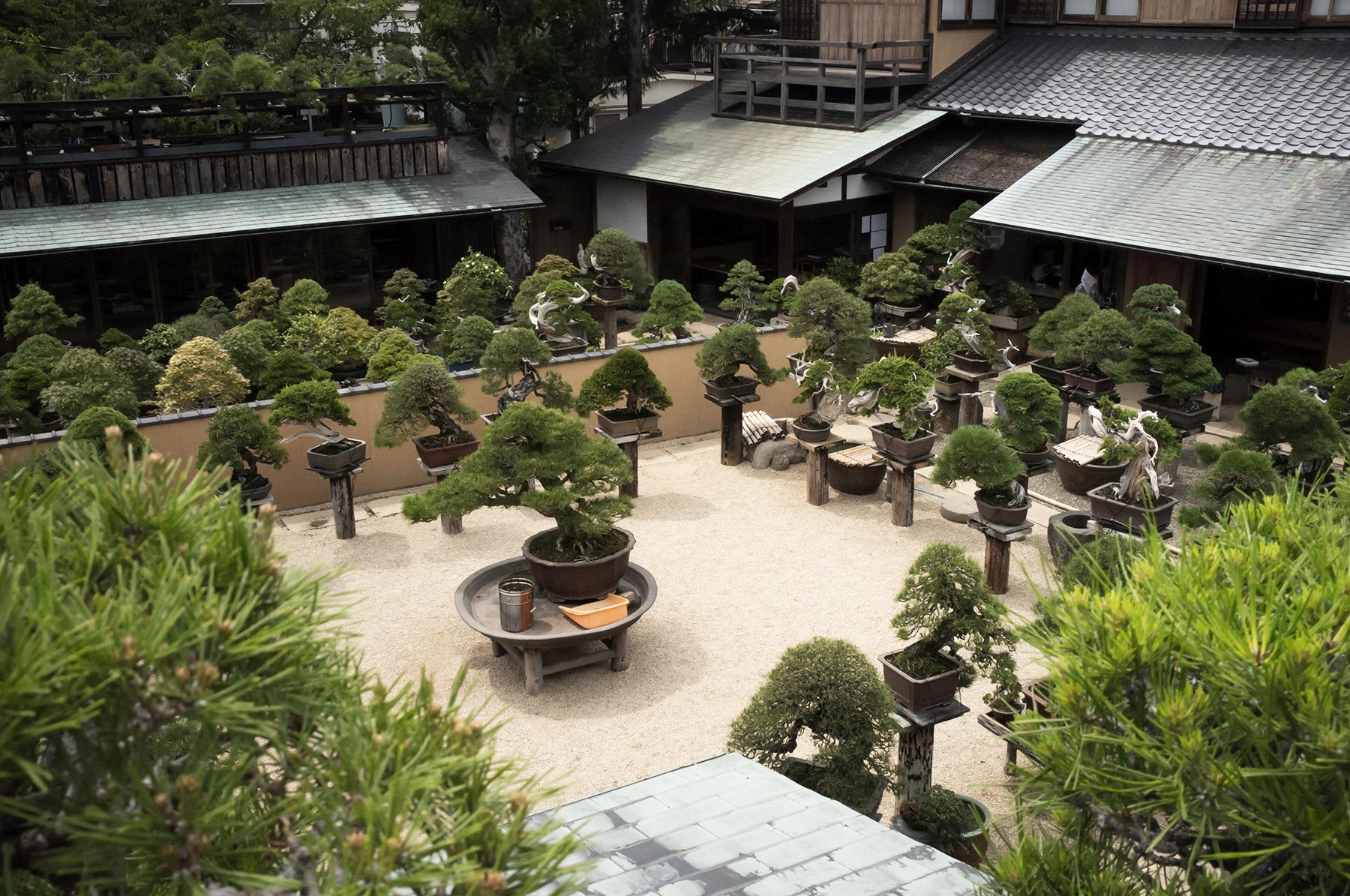 Tokyo bonsai museum Shunkaen