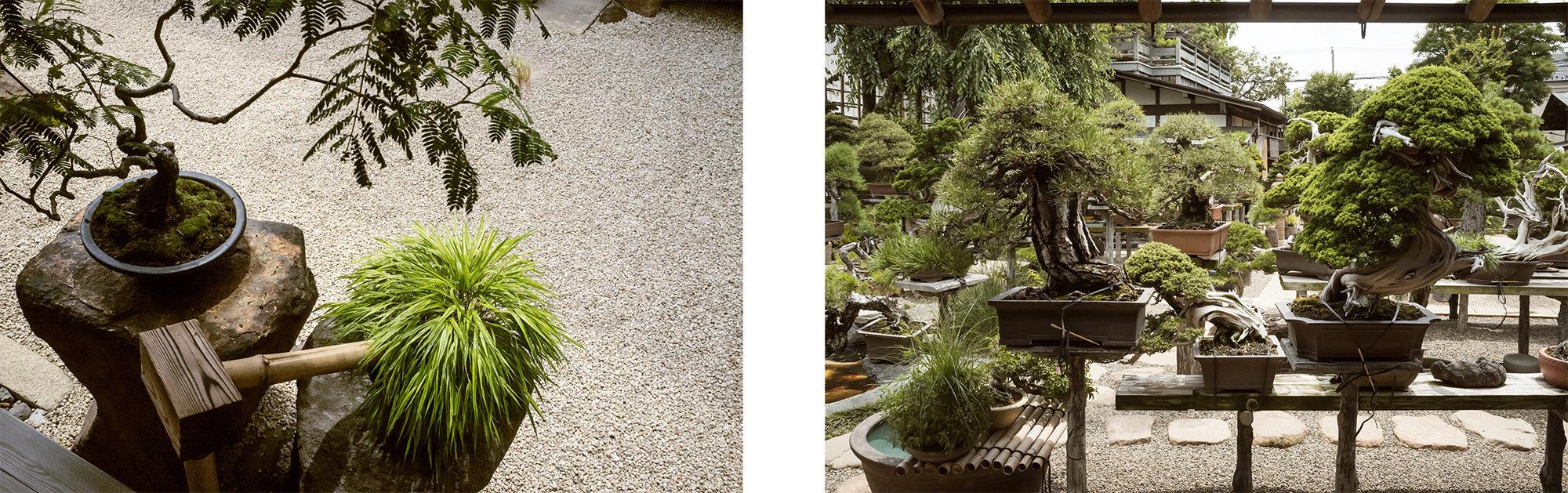 shunkaen bonsai museum tokyo