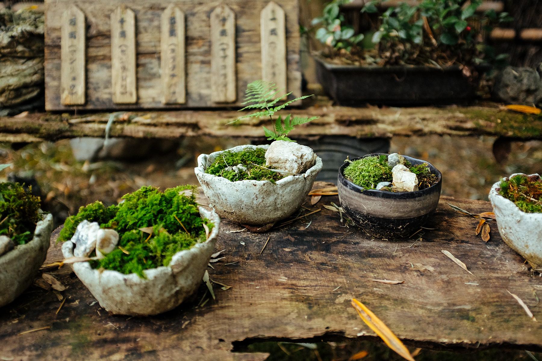 Moss Kyoto